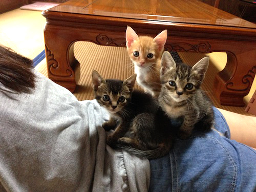 cat_etc145.jpg