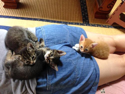 cat_etc146.jpg