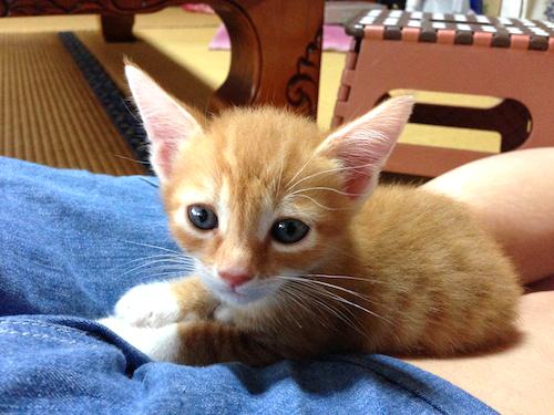 cat_etc147.jpg