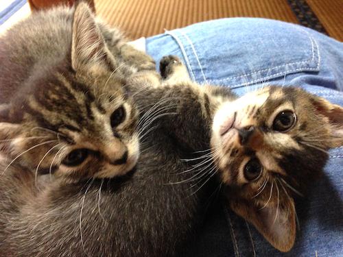 cat_etc149.jpg