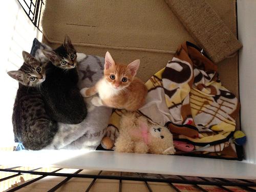 cat_etc154.jpg