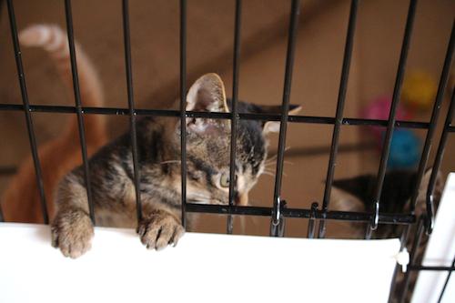 cat_etc155.jpg