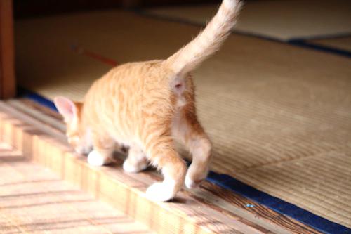 cat_etc157.jpg