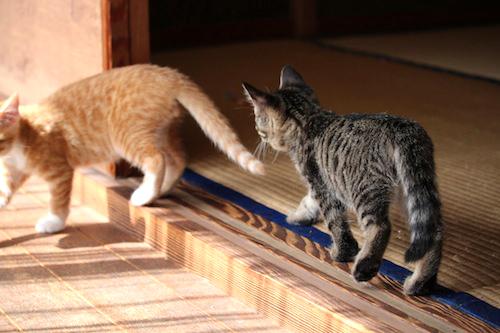 cat_etc158.jpg
