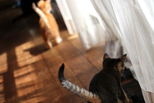 cat_etc159.jpg