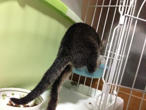 cat_etc161.jpg