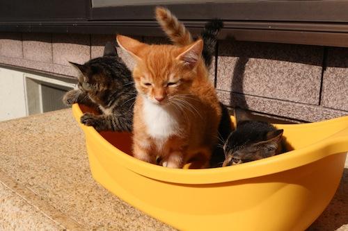 cat_etc162.jpg