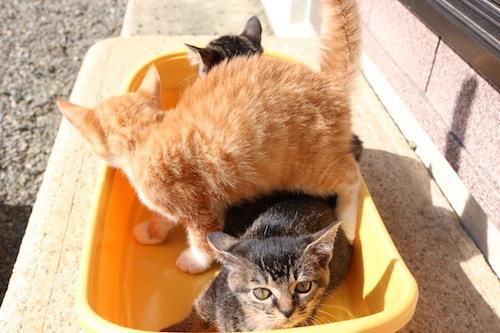 cat_etc163.jpg