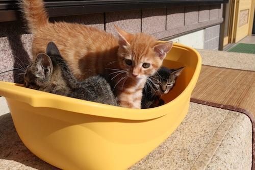 cat_etc164.jpg
