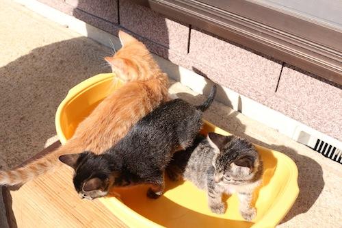 cat_etc168.jpg