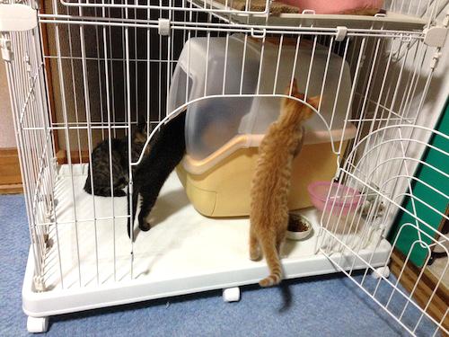 cat_etc172.jpg