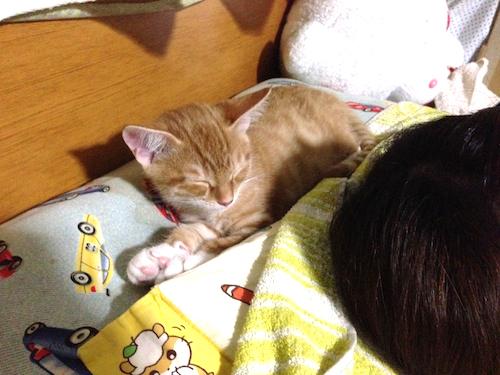 cat_etc181.jpg
