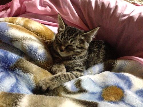cat_etc182.jpg