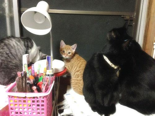 cats142.jpg