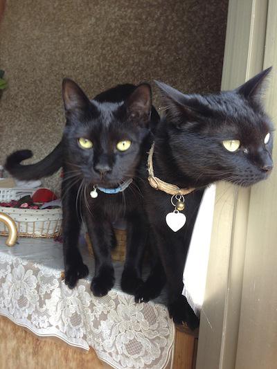 cats143.jpg