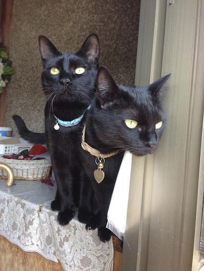 cats144.jpg