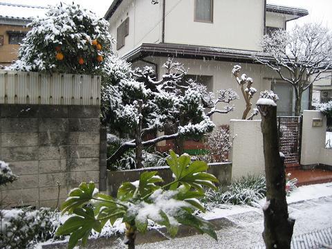 雪の朝 005