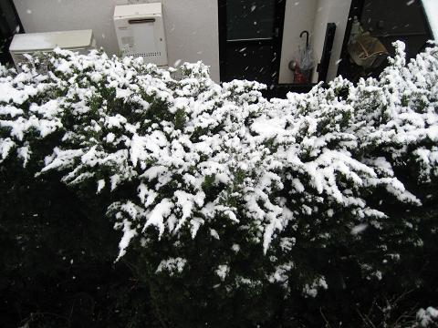 雪の朝 011