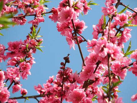 ご近所の春 010