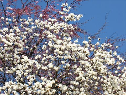 五島美術館の春 002