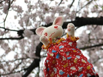 桜にゃあこ 021