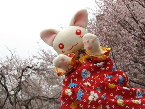 桜にゃあこ 086