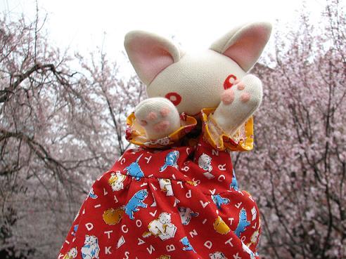 桜にゃあこ 087
