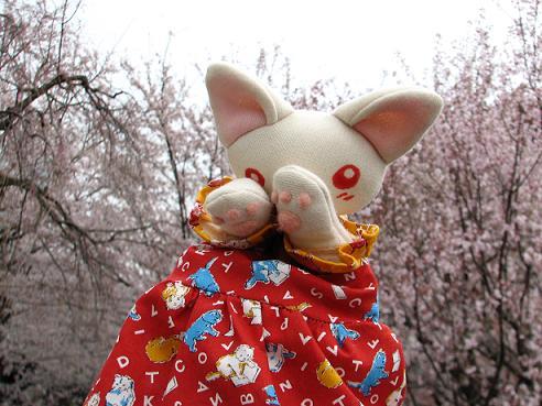 桜にゃあこ 088