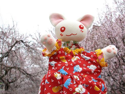 桜にゃあこ 089