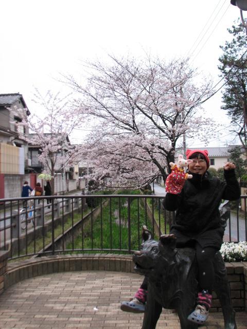 桜にゃあこ 169