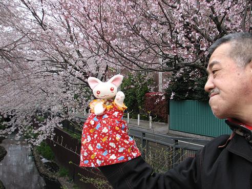 桜にゃあこ 075