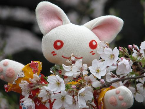 桜にゃあこ 060