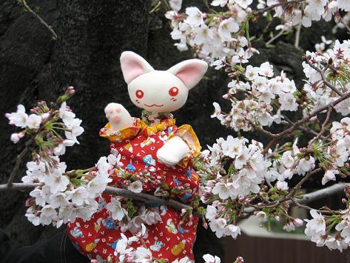 桜にゃあこ 066