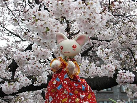桜にゃあこ 044