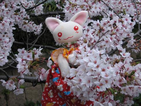 桜にゃあこ 188