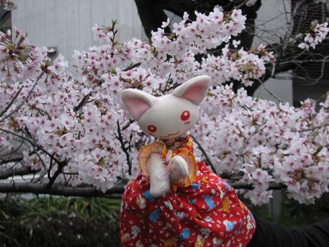 桜にゃあこ 186