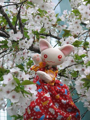 桜にゃあこ 115