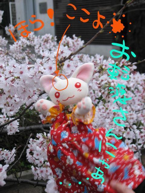 桜にゃあこおてんばさん