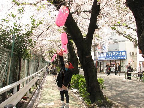 桜にゃあこ巣鴨へ行く 005