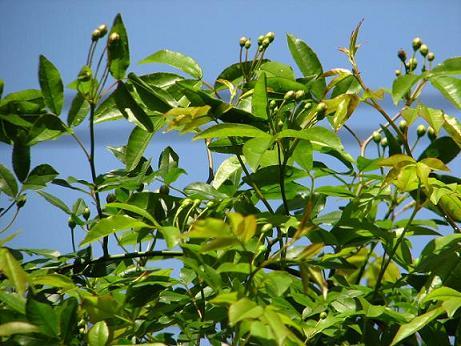 新緑の庭 026