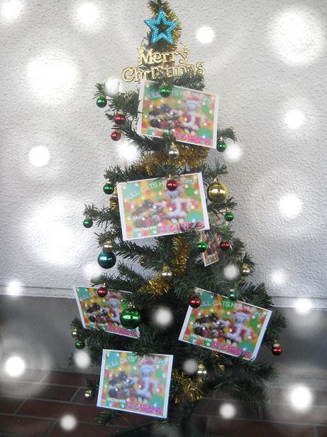 コピー ~ 降る猫クリスマスツリーウイッシュダこぼし 003