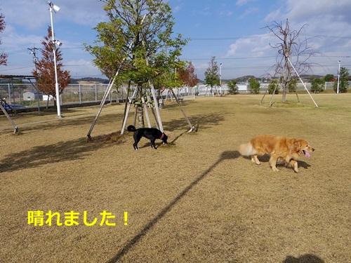 IMGP0274_20141220181545c8b.jpg