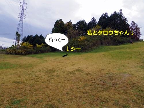 IMGP0423.jpg