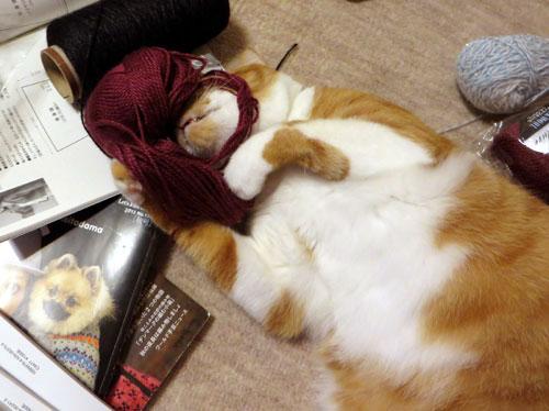 糸をかぶるネコ1
