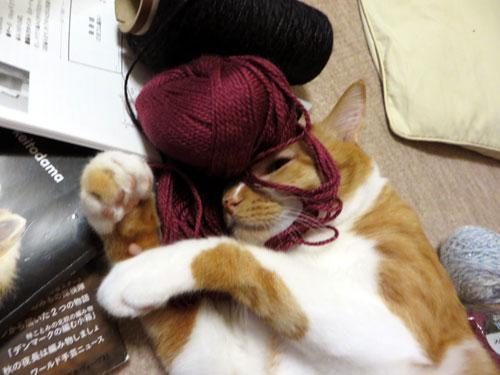 糸をかぶるネコ2