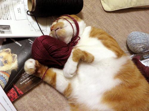 糸をかぶるネコ3