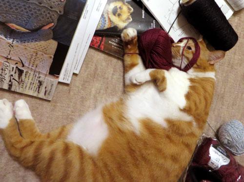 糸をかぶるネコ4