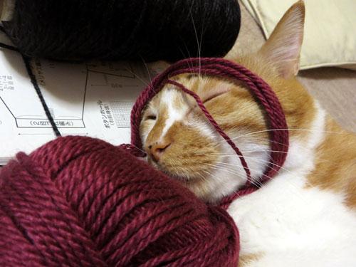 糸をかぶるネコ5