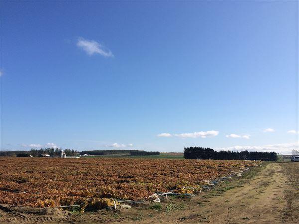 matome 北海道 006