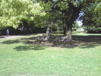 行田公園の画像 06